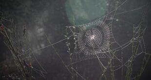Ein Spinnennetz ist wie eine Schuldenfalle.